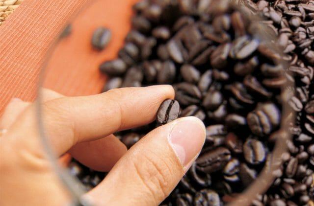 コーヒー豆はどうやって選別しているの?生豆から選別や格付けの方法を解説